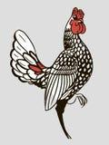 Gallo rosso Immagini Stock