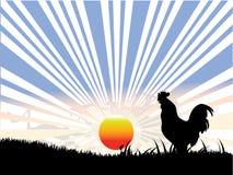 Gallo, sol e hierba negra Fotografía de archivo libre de regalías