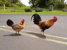 Gallo valiente y su gallina imagen de archivo