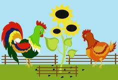 Gallo y gallina Imagen de archivo