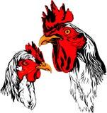 Gallo y gallina Imagenes de archivo