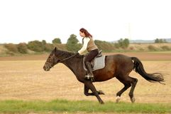Gallop. Equestrienne rides on a horse at a gallop. Hanoverian Royalty Free Stock Photography