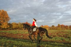 Gallop. Equestrienne rides on the hillside. Hanoverian Stock Image