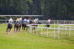 Gallop Stock Images