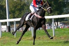 Gallop Stock Photo
