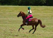 gallop Стоковое фото RF
