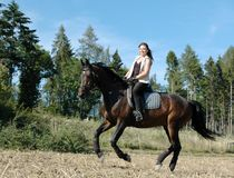 Gallop. Horse and equestrienne. Hanoverian. Equestrienne gallops on hillside Royalty Free Stock Images