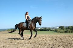 Gallop. Horse and equestrienne. Hanoverian. Equestrienne gallops on field Royalty Free Stock Photo