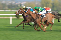 Gallop in horse racing in Prague. Gallop in the 88th Gomba handicap held on Prague om 7.4.2014 Royalty Free Stock Images