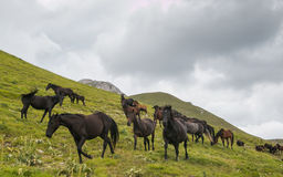 Gallop horses in mountain Royalty Free Stock Photos