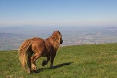 Gallop stallion. Portrait of gallo stallion on the mountain landscape Stock Image