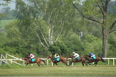 Gallop in steeplechase in Lysa nad Labem Royalty Free Stock Photo