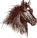 galloping лошадь Стоковые Изображения