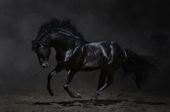 Galloping black horse on dark background. Low-key photography of galloping black horse Royalty Free Stock Image