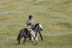 Galloping Cowboy. Cowboy galloping horse through grassy meadow stock image