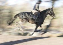 Galloping dark horse Royalty Free Stock Photography