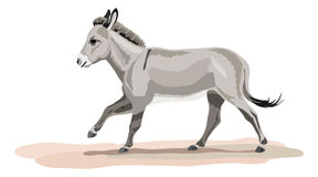 Galloping donkey on sand bottom Royalty Free Stock Photo