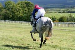 Galloping grey. Horse and jockey gallop on Stock Photography