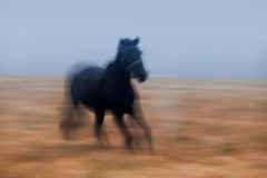 Galloping Horse stock photos