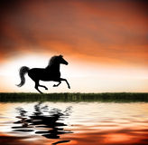 Galloping horse. The silhouette of a horse with a flowing main and tail galloping across a field in front of a body of water in the early morning or at sunset Royalty Free Stock Photo