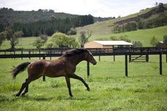 Galloping horse Stock Photos