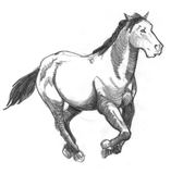 Galloping horse. Sketch of a galloping horse Royalty Free Stock Photography