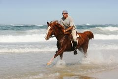 Galloping Horse at beach. Galloping brown horse and rider in the shallow water at the beach Stock Photo