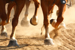 Galloping Horse Hooves. Close-up on the feet of galloping horses Royalty Free Stock Photography