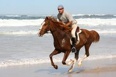 Galloping Horse with Rider. Galloping brown horse and rider at the beach Stock Images
