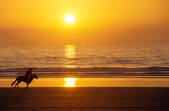 Galloping horse and rider at sunset on the beach. Silhouette of a galloping horse and rider at sunset on the sand beach, with sun reflecting on sea Royalty Free Stock Photos