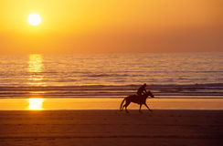 Galloping horse and rider at sunset on sand beach Royalty Free Stock Photography