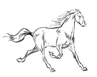 Galloping horses. Hand-drawn illustration Royalty Free Stock Images