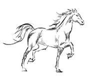 Galloping horses. Hand-drawn illustration Stock Photos