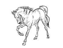 Galloping horses. Hand-drawn illustration Royalty Free Stock Photo