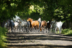 Galloping horses at pasture Stock Photos