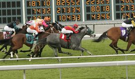 Galloping Past the Numbers. A field of jockeys race past the odds board in a thoroughbred turf race stock images