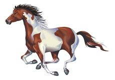 Galloping Spotted Horse royalty free illustration