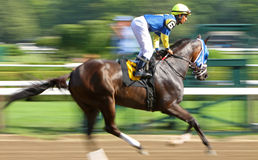 Galloping to the Starting Gate Stock Photo