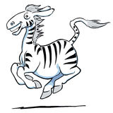 Galloping Zebra Stock Image