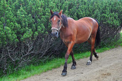 gallops лошадь Стоковые Фотографии RF