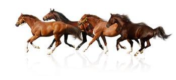 табун gallops Стоковое Изображение RF