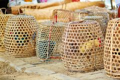 Gallos enjaulados en un mercado del Balinese Foto de archivo libre de regalías