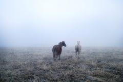 Gallping dans le brouillard Photo libre de droits