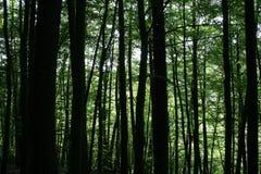 Galme d'ombre et de vert dans la forêt Images stock
