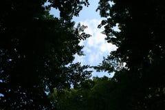 Galme d'ombre et de vert dans la forêt Image libre de droits