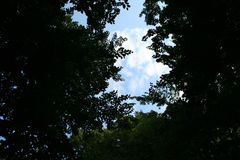 Galme van schaduw en groen in het bos Royalty-vrije Stock Afbeelding