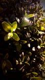Galna växter Royaltyfri Fotografi