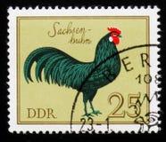 Galo de Saxony do galo dos galos alemães da série, cerca de 1979 Fotos de Stock