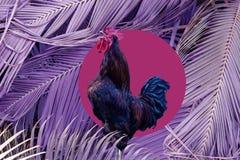 Galo do canto da colagem da arte contempor?nea no fundo grande roxo das folhas de palmeira Conceito moderno da cultura do zine do imagens de stock
