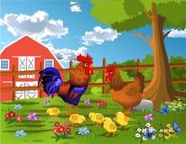 Galo, galinha e galinha na exploração agrícola Ilustração Stock